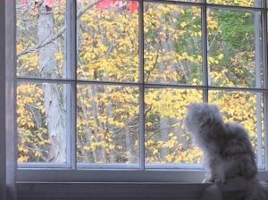 Kitty at window
